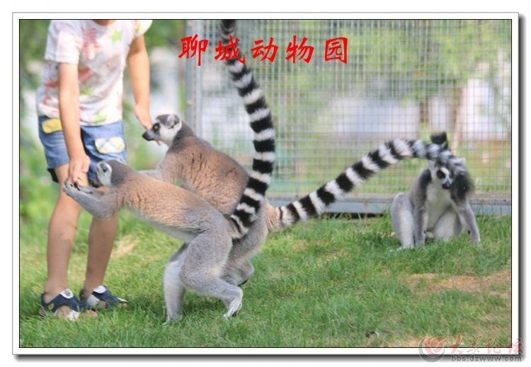 动物园14.jpg