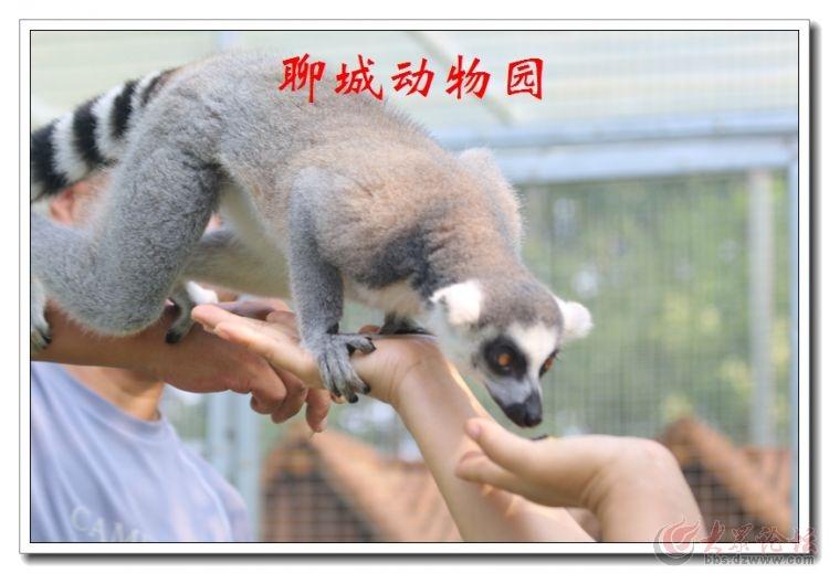 动物园13.jpg