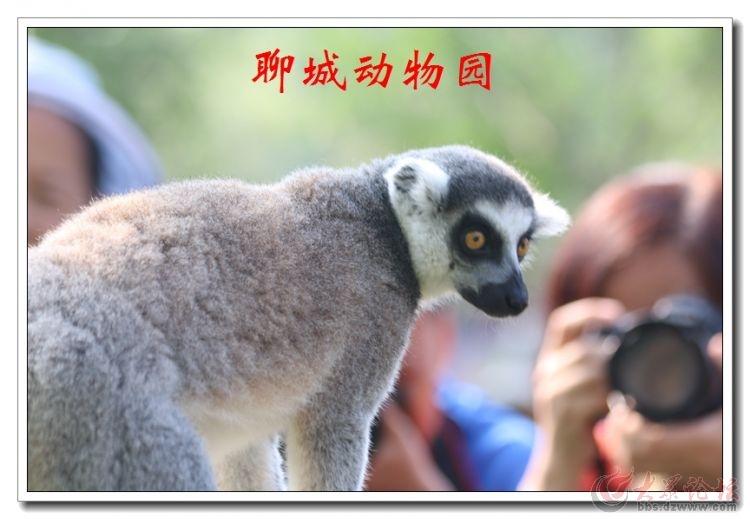 动物园17.jpg