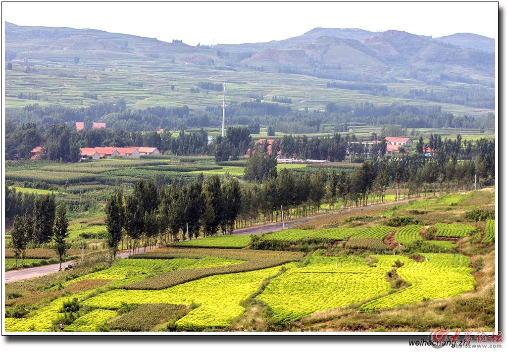安丘千松岭风景生态园