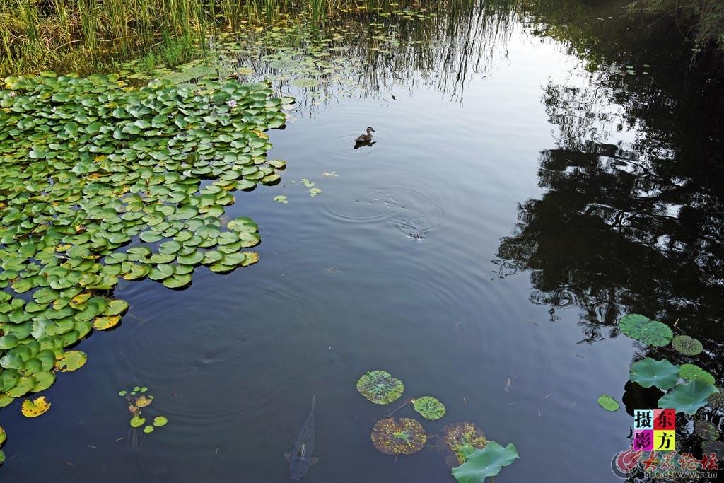 一山湖水公园8..jpg