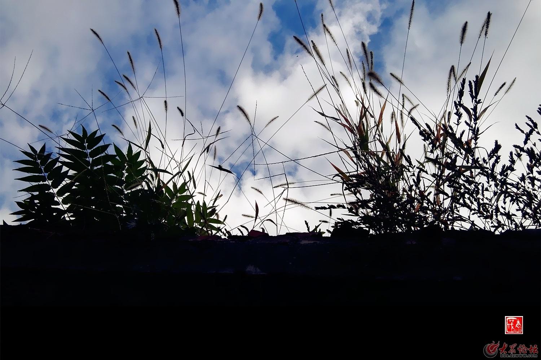 【老茂图话】墙头草的气象风云下载动态信走暴漫画微表情包大全图片