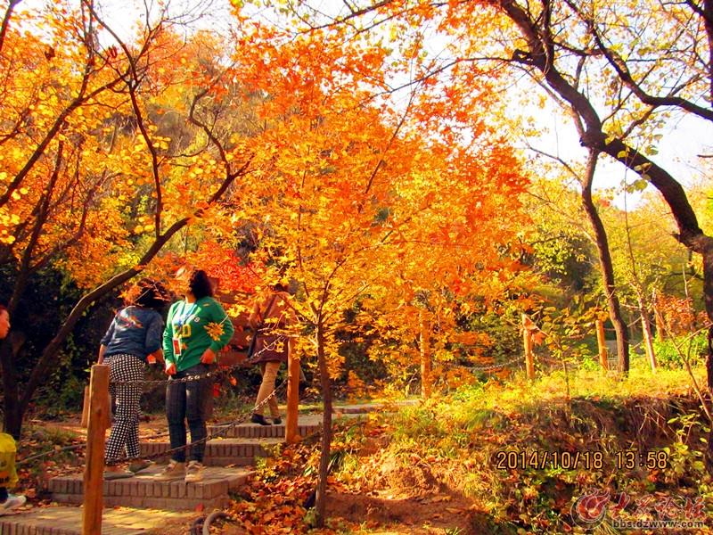 北京长城红叶岭风光图片