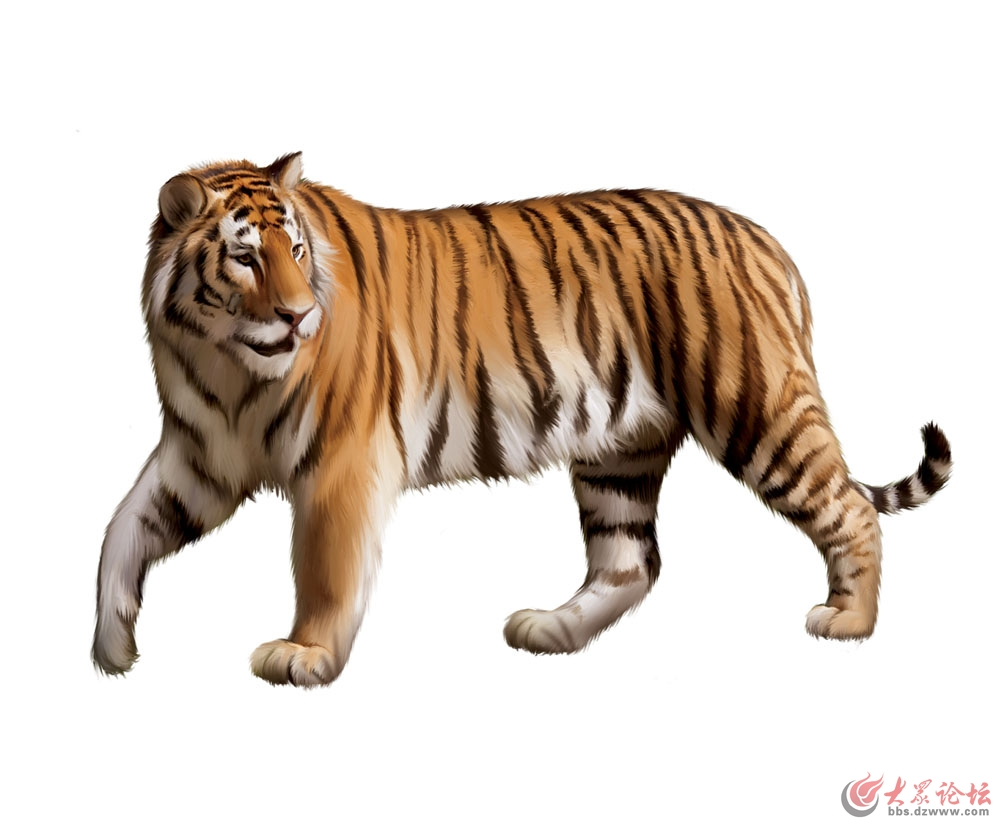 动物园老虎咬人游客身亡老虎被击毙