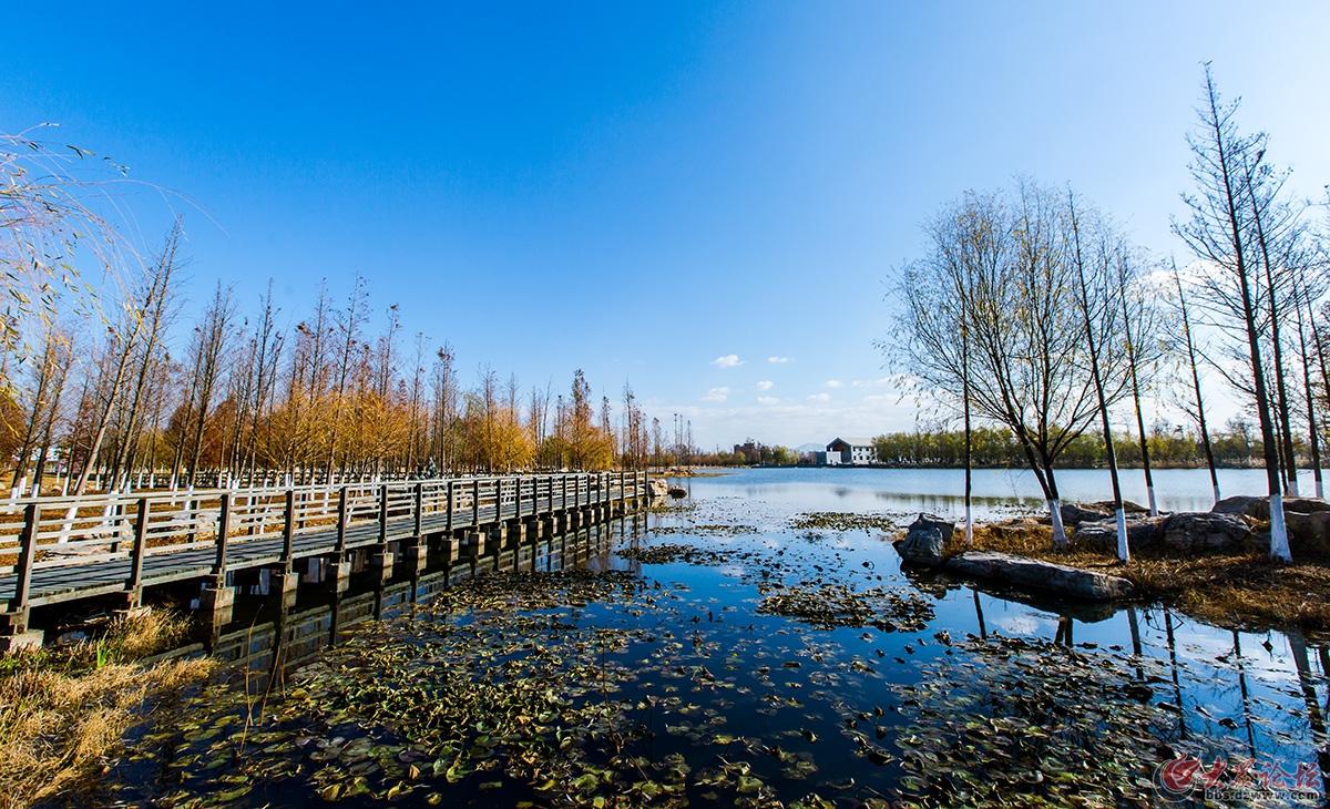 已发表籽辰摄影 (2016年11月28日)牟平鱼鸟河公园-1.jpg