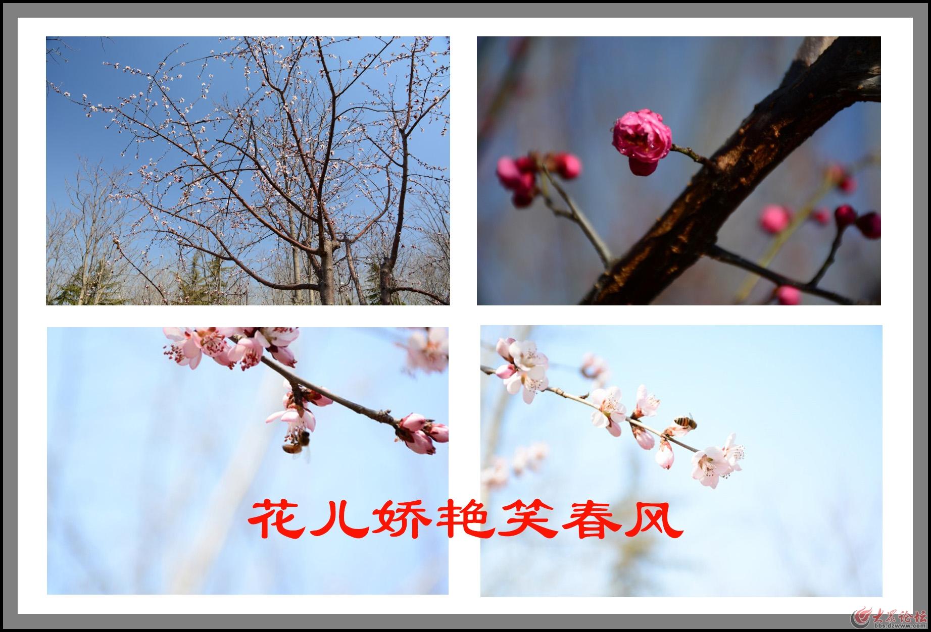 花儿.jpg