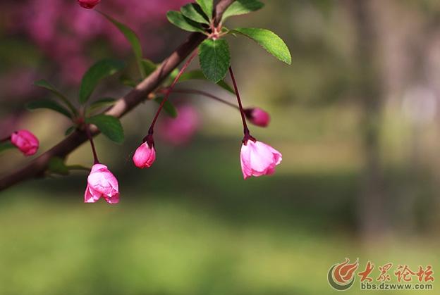 春天的花 040副本.jpg