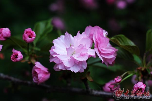 春天的花 003副本.jpg