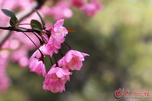 春天的花 038副本.jpg
