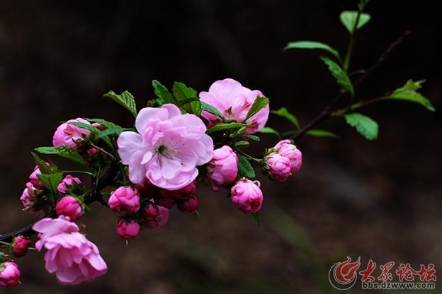 春天的花 022副本.jpg
