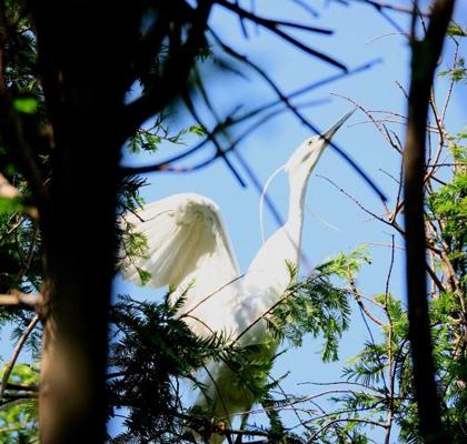 人鸟共处和谐自然-----